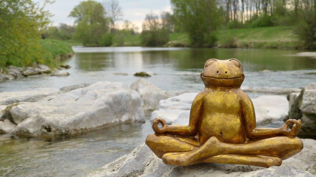 Water River In The Free Frog  - silviarita / Pixabay