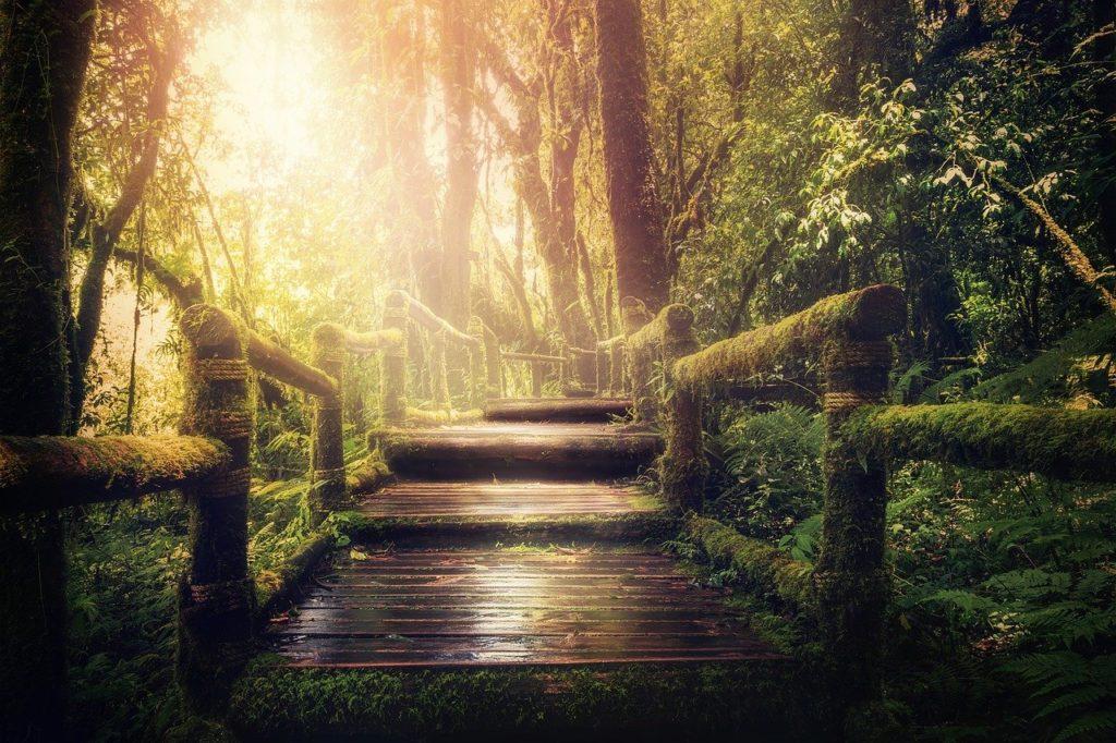 Jungle Away Trees Background Image  - DarkmoonArt_de / Pixabay